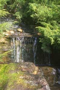 Bachblüten: Rock Water