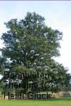 Bachblüten: Oak